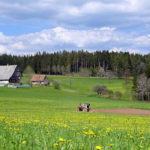 Unterer Falken, Schnapsbrennerhof